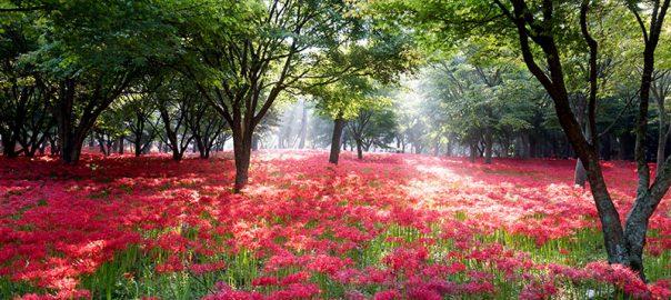 بهار در کره جنوبی