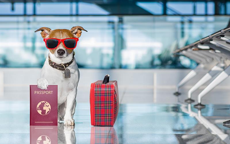 قوانین حمل حیوانات خانگی برای سفرهای هوایی