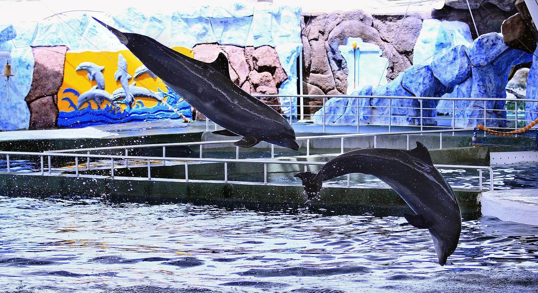 پارگ دلفین کیش
