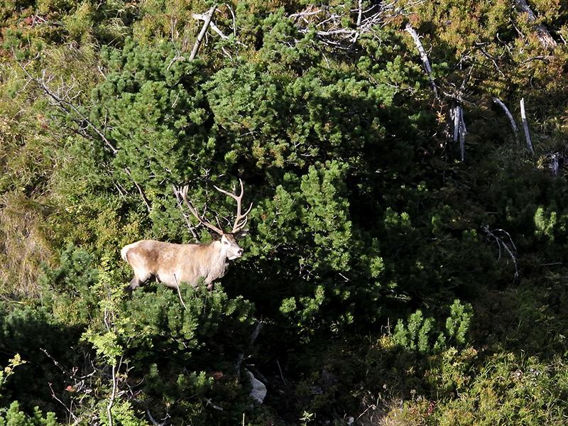معرفی پارک ملی