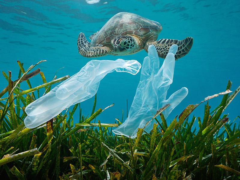 اهمیت حفظ اقیانوس ها