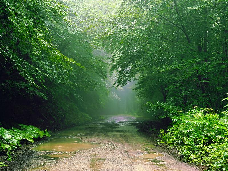 طبیعت-آمل