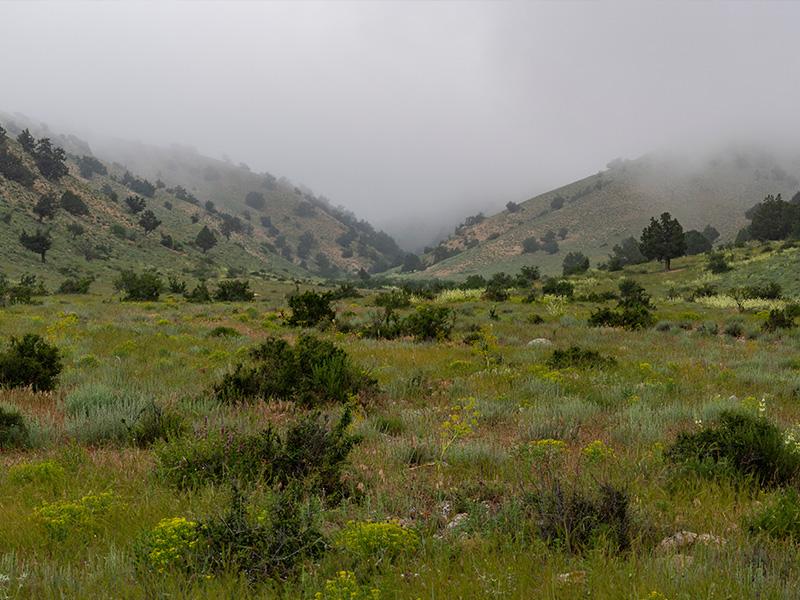محیط زیست پارک های ملی
