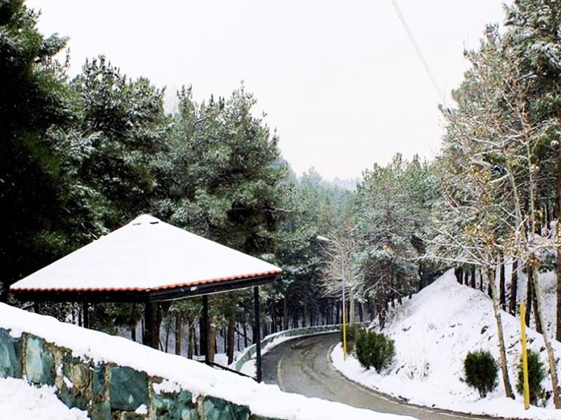 پارک-جنگلی-شیان-در-یکروز-برفی