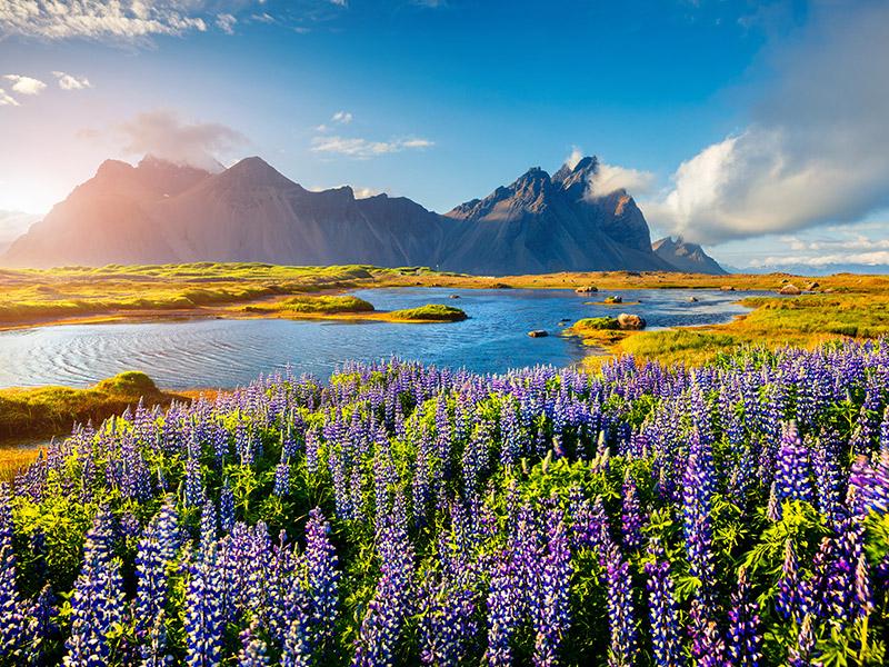 فیلم زندگی پنهان والتر میتی در طبیعت زیبای ایسلند