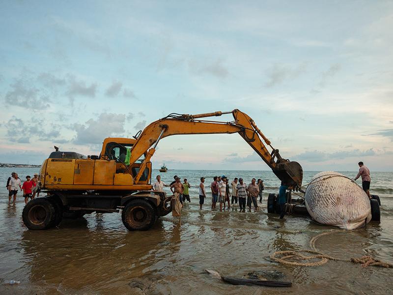مرگ نهنگ ها در جزیره کیش