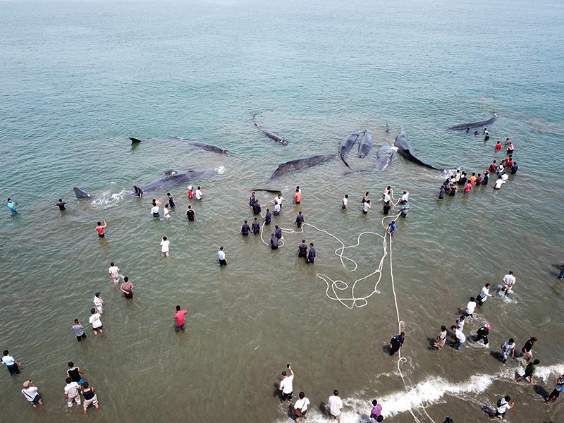 مرگ نهنگ های جزیره کیش