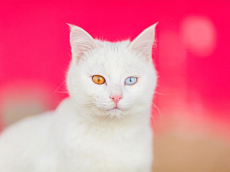 همه چیز درباره خانه گربه های وان