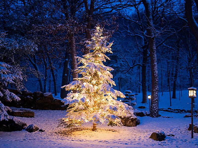 گریلا، جادوگر مهیب و ترسناک کریسمس ایسلند