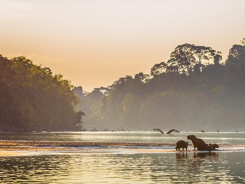 ۸ تا از خطرناک ترین حیوانات جنگل آمازون را بشناسید!